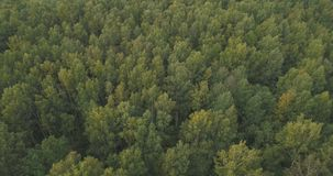 Aerial flying over summer forest on a cloudy day Royalty Free Stock Image