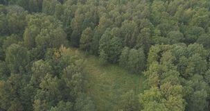 Aerial flying over summer forest on a cloudy day Stock Photo