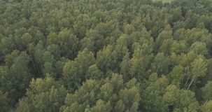 Aerial flying over summer forest on a cloudy day Stock Photos