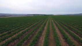 Aerial flyover grape farms in California stock footage