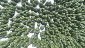 Aerial: foggy winter forest stock footage