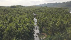 Aerial footage of a tranquil rural place with wide coconut plantation and river.