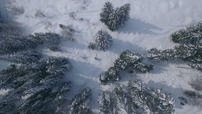 Aerial footage above pine trees stock footage