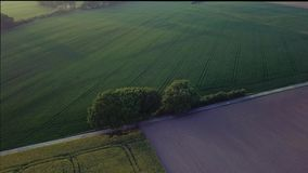 Aerial footage cinematic mid-speed orbit and reveal Drone shot of trees in the middle of fields in sunset. stock video footage