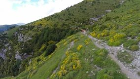 Aerial footage of cows parque nacional ordesa y monte perdido Spain Royalty Free Stock Images