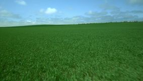 Field of fresh green grass. Aerial footage Field of fresh green grass stock footage