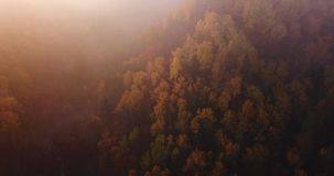 Aerial Footage of Forest, Drone starts PAnning From Clouds Towards The Forest Slowly, Golden and Red Colour Trees, stock video