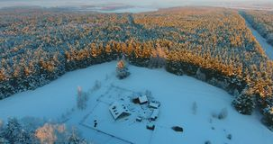 Aerial footage forest in winter stock video