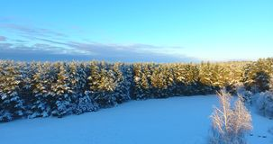Aerial footage forest in winter. Winter evening at dusk. stock video footage