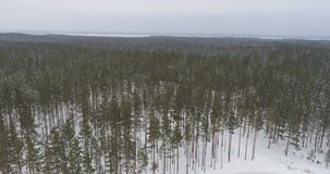 Aerial footage of frozen trees in the snow. Snowfall. Nature landscape. Aerial footage of frozen trees in the snow in winter. Nature landscape stock video footage