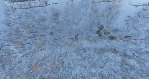 Aerial footage of frozen trees in the snow. Snowfall. Nature landscape. Aerial footage of frozen trees in the snow in winter. Nature landscape stock footage