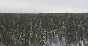 Aerial footage of frozen trees in the snow. Snowfall. Nature landscape. Aerial footage of frozen trees in the snow in winter. Nature landscape stock video