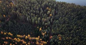 Aerial Footage of Green Pine and Yellow Birch Forest, Slowly Sliding Over the Tops of the Trees - Moody Video, North East Europe. Autumn Colours stock footage