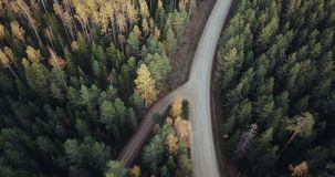 Aerial Footage Over Green Pine and Yellow Birch Forest with the Road in the Middle of it, Camera Follows the Road stock footage