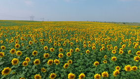 Aerial footage of road and transport, people traveling by cars on a freeway. Amongst sunflower field stock video