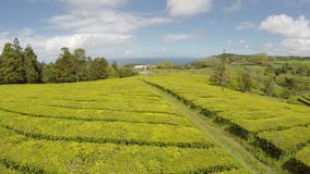 Aerial Footage Tea plantation at Cha Gorreana, Maia, San Miguel, Azores, Portugal stock footage