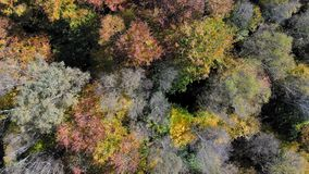 Aerial Footage View. Flight over autumn mountains with forests, meadows and hills in sunset soft light.
