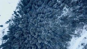 Aerial footage of winter fir tree forest in the mountains. View from above of pine trees covered with snow. Quadcopter stock video