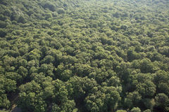 Aerial forest Stock Photos