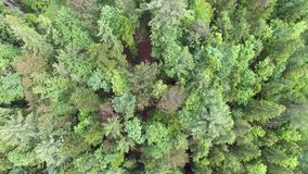 Aerial Forest from above stock footage