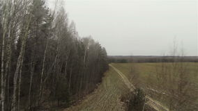 Aerial forest field border, byroad in country side stock video footage