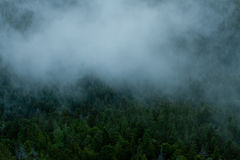 Aerial forest in fog royalty free stock photos