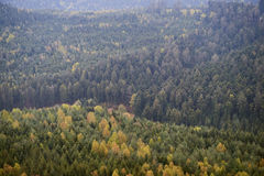 Aerial forest mistycal above green Royalty Free Stock Images