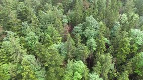 Aerial Forest Panning stock footage
