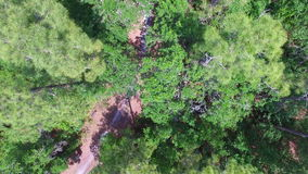 Aerial of a forest. Top down drone footage of a forest in Central Florida stock footage
