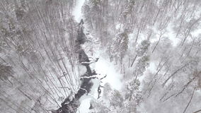 Aerial frozen pine and fir trees in the snow in winter. Many trees, wood. Thick forest aerial view. Helicopter drone stock video