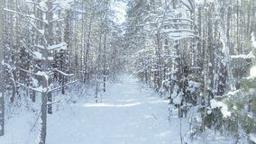 AERIAL Frozen winter forest dense, forest thicket, with nice snowfall and sun dolly zoom effect stock footage