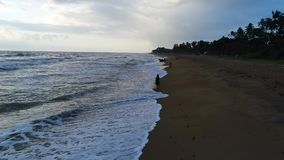Aerial of the girl who walks along at the sandy beach at sunset in Sri Lanka. A girl walks at sunset on the sandy beach washed by sea waves at the resort in Sri stock footage