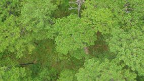 Aerial green forest, view from above. Aerial green forest, view from above at wild stock footage