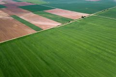 Aerial green wheat field. Aerial view large green field. stock images