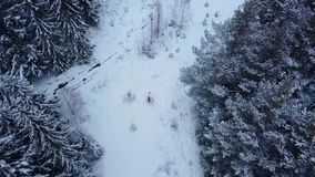 Aerial of groom spinning happy bride holding her in his hands in snow weather fir tree spruce forest during snowfall. Happy newlyweds have fun. Drone flyes stock footage