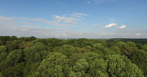 Aerial Horizontal View of Tree Tops Green Forest. Bird's-Eye View of Tree tops Green Pine Forest at High Speed on Sunset stock video