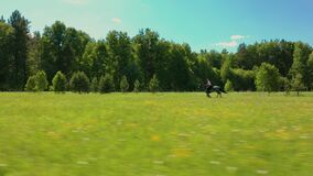 Aerial: horse with woman rider galloping across field at summer sunny day. Aerial: horse with rider galloping across field at summer sunny day. Woman horseman stock video footage