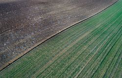 Aerial image of agricultural fields. Aerial view of agricultural green and brown fields in perspective, shoot from drone in winter time Royalty Free Stock Images