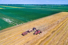 Harvest in wheat field Royalty Free Stock Photos