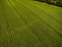Aerial image of a lush green filed Royalty Free Stock Photos