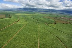 Aerial of irrigated cropland. Aerial of irrigated cropland in Maui, Hawaii stock image
