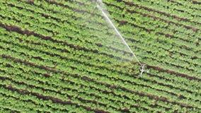 Aerial: Irrigation Sprinklers in the field. Watering the field. stock footage