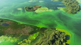 Aerial of islands on wide river polluted with green algae. Environmental problems, ecology and nature stock video footage