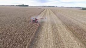 Aerial 4k shot on big agriculture combine truck machine tractor vehicle harvesting organic crop wheat from farming field stock video footage