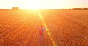 Low flight over young man tourist walking across a huge wheat field. Hands up, winner, happy and freedom concept. Aerial 4K UHD view. Hands up, winner stock video footage