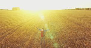Low flight over young man tourist walking across a huge wheat field. Hands up, winner, happy and freedom concept. Aerial 4K UHD view. Hands up, winner stock video