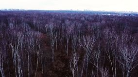 Aerial landscape bare trees without foliage in autumn forest on eve winter season stock video footage