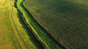 Drone aerial view with sunflower field royalty free stock images