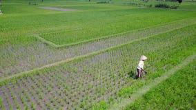Aerial landscape of farmer working on paddy fields. Yogyakarta, Indonesia. August 07, 2017: Beautiful aerial landscape footage of a male farmer working on paddy stock video footage