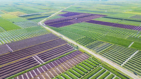 Aerial landscape of red onion field. Beautiful aerial landscape of red onion field with green leaves and road. Shot in Brebes, Central Java, Indonesia stock image